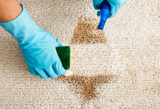 Image of a carpet cleaner removing carpet stain using sprinkler and sponge.